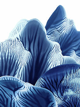 Amy Vangsgard - Blue and White Mountains Monoprint Tall