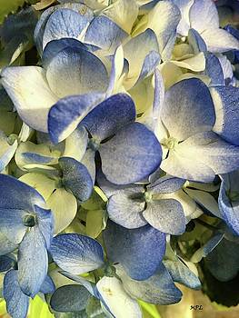 Blue and White Mystic Flowers by Marian Palucci-Lonzetta