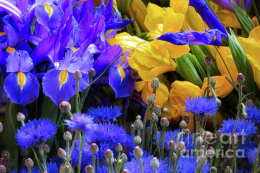 Blue and Yellow Bouquet by Jerry Fornarotto