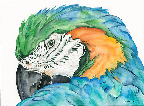 Blue-and-yellow Macaw by Kimberly Lavelle