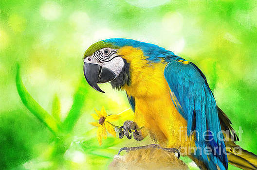 Lois Bryan - Blue And Yellow Macaw