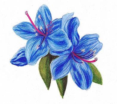 Scarlett Royal - Blue Azalea