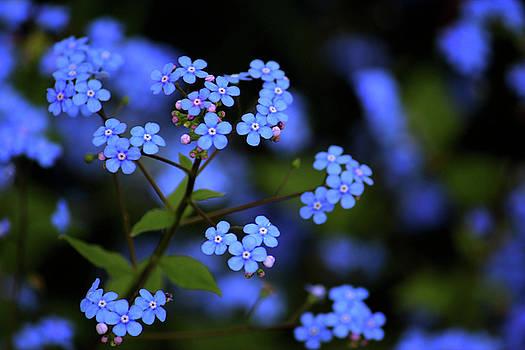 Blue Beauty by Rowana Ray