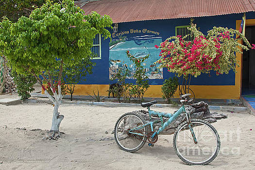 Blue bicycle by Jean-Luc Baron