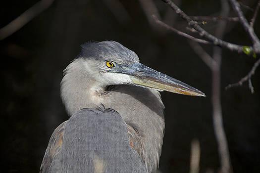 Jon Glaser - Blue Bird