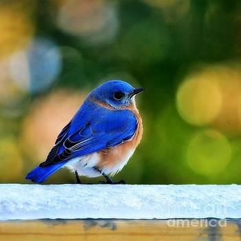 Blue Bird by Kelly Nowak