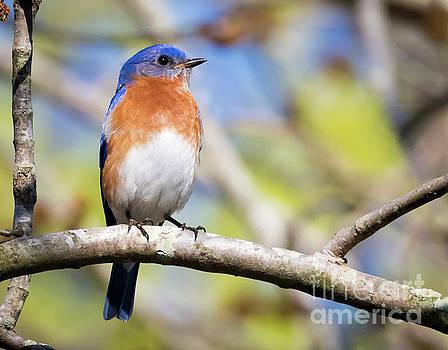 Blue Bird by Ricky L Jones