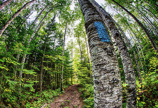 Blue Blaze of the Superior Hiking Trail by Christopher Broste