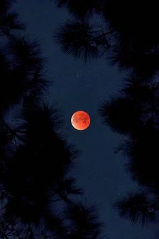 Blue Blood Moon by Vincent James