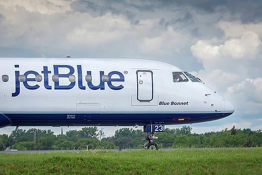 Blue Bonnet by Guy Whiteley