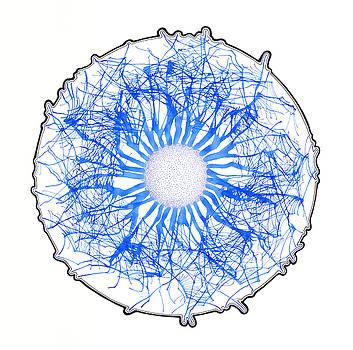 Blue Bubble by Rob Messick