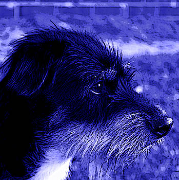 Blue Buddy by Tammy  Shiver
