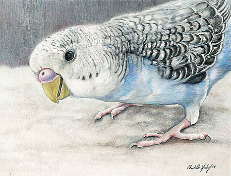 Blue Budgie by Charlotte Yealey