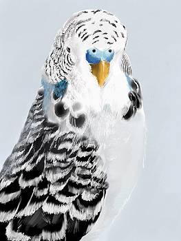 Blue Budgie by KC Gillies