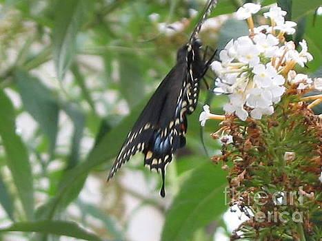 Blue Butterfly by Iris Newman
