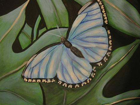 Blue Butterfly by Janene Hall