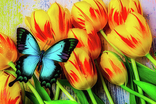 Blue Butterfly On Tulips by Garry Gay