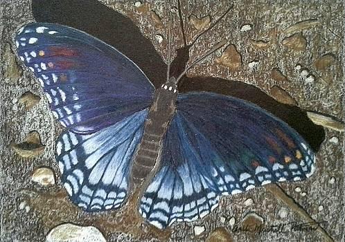 Blue Butterfly - Savannah Charaxes by Anita Putman