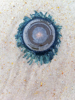 Paul Rebmann - Blue Button