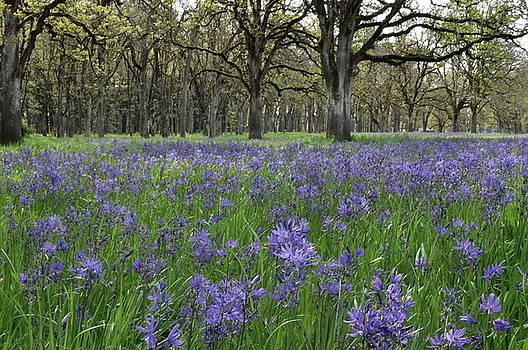 Blue Carpet by Emilia Brasier