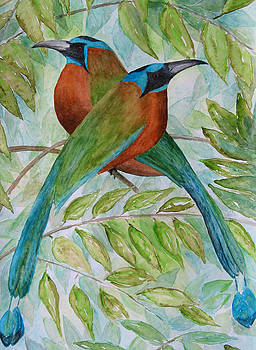 Patricia Beebe - Blue Crowned Motmots