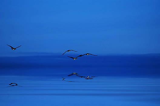 Blue Dawn by JGracey Stinson