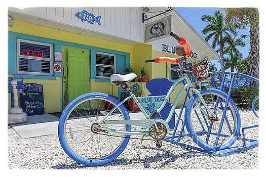Blue Dog Matlacha Island Florida by Edward Fielding