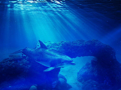 Blue Dolphin and Light by Stephanie Laird