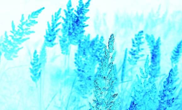 Blue dreaming by Roman Aj