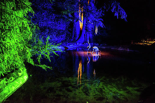 Blue Egrets at night by Michael Bessler