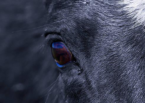 Blue Eye by Janaka Somaratne
