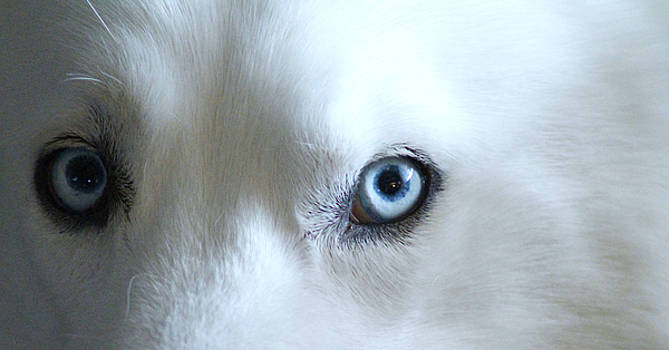 Blue Eyes by Danielle Allard