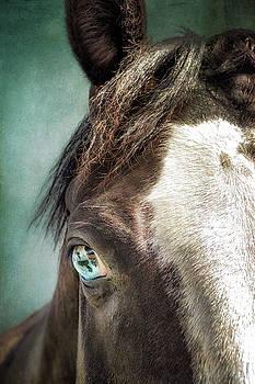 Blue Eyes by Debby Herold