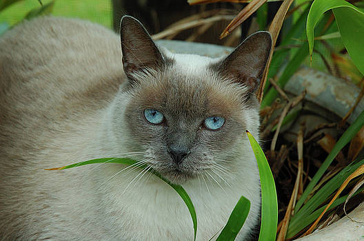 Kathi Shotwell - Blue Eyes in the Garden