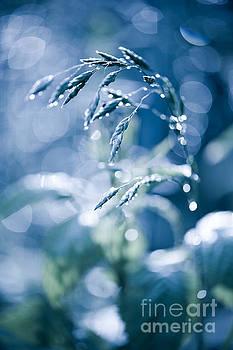 Blue fabulous grass shining by Arletta Cwalina