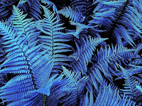 Colin Drysdale - Blue Ferns