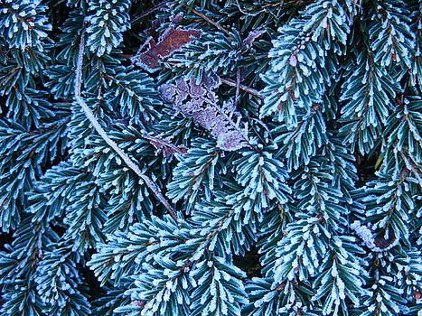 Blue Fir and a Leaf by Nik Watt