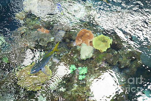 Blue Fish by Carol Lynn Coronios