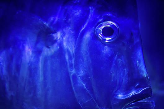 Jeff Phillippi - Blue Fish