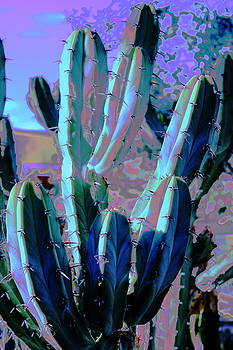 Blue Flame Cactus Moonglow by M Diane Bonaparte