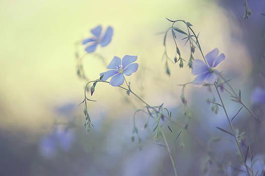 Jenny Rainbow - Blue Flex Flower. Nostalgic