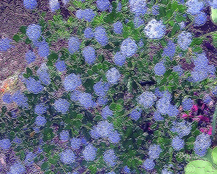 Blue Flower Clusters #059 by Barbara Tristan