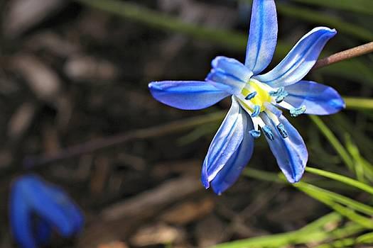 Andrew Davis - Blue Flower Macro