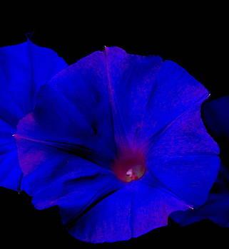 Blue Flowers by Aldonia Bailey