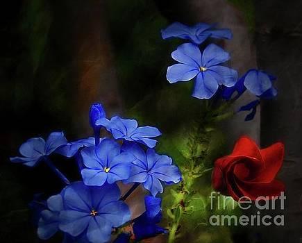 Blue Flowers Growing Up The Apple Tree by John Kolenberg