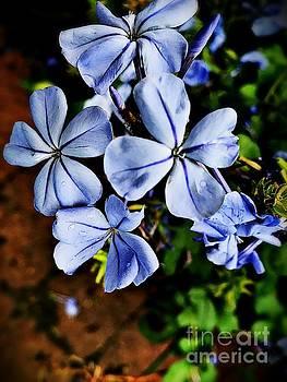 Blue Flowers by JB Thomas