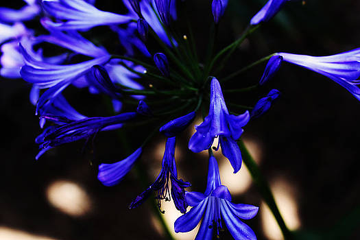 Blue Flowers by Magdalena Green