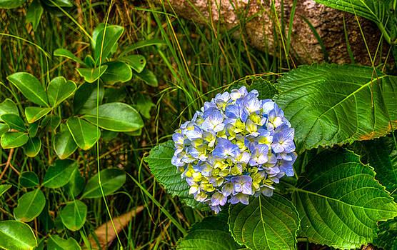 Scott Harris - Blue Flowers