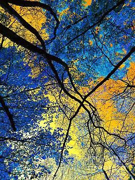 Blue Forest by Daniel Janda