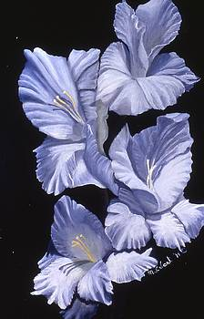 Mary Erbert - Blue Glads